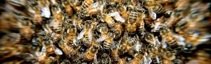 formation apiculture herault
