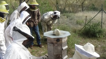 formation apiculture